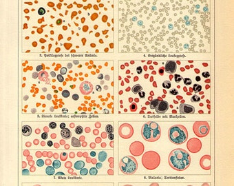 1890 BLOOD Science microscope Print, Anatomy Wall Art, bacteria virus malaria engraving bookplate