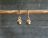 Tiny Acorn Earrings // Small realistic acorn nuts on hypoallergenic 14k gold filled earwires for sensitive ears