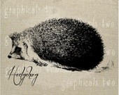 Hedgehog hedgerow animal Instant graphic digital download image for iron on fabric transfer burlap decoupage pillow card tote No. gt166