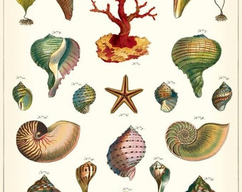 Vintage Look Mervielles de le Mer Gift Wrap or Poster by Cavallini