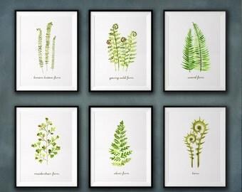 Fern print, Fern watercolor painting, Botanical chart, Set of 6, Nature print, Spring decor Silver fern, Maidenhair fern, Sword fern