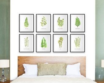 Watercolor paintings, Botanical art print, Fern print Set of 8 print, Bedroom art, Green leaf art print sets, Nature print, Spring wall art