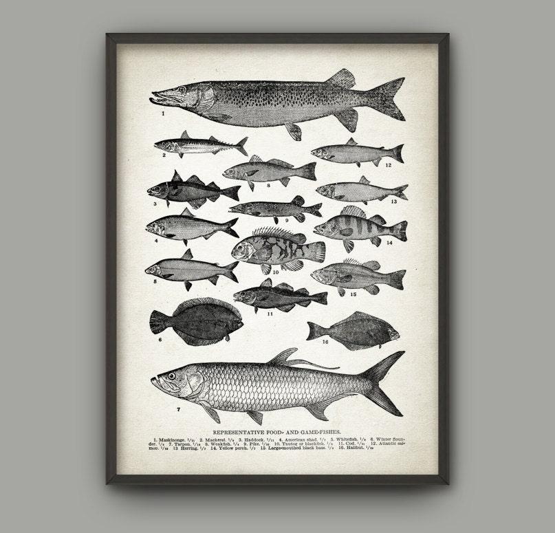 Vintage Fish Wall Art Print Antique Fish Book Plate
