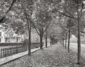 Autumn Street Scene, 1899. Vintage Photo Digital Download. Black & White Photograph. Fall, Leaves, Trees, Sidewalk, 1800s, Historical.