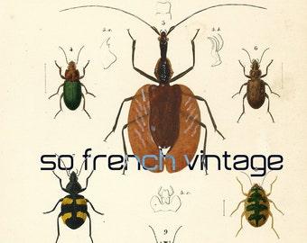 1861 lucane cerf volant passale dents insectes. Black Bedroom Furniture Sets. Home Design Ideas