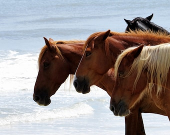 Wild Horses of the Outer Banks, Corolla North Carolina Beach Photography, Herd by the Water, Salty waves, Pictures of animals Ocean, Free