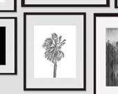 Wall Print Art, Palm Tree Art Printable, Palm Tree Decor, 8x10, Hawaiian, Tropical, Island, Wall Decor, Black and White, Modern, Photography