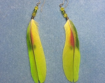Lime green with a splash of red Amazon parrot feather earrings adorned with Czech glass beads.