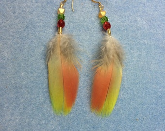 Olive green and orange red-fronted macaw feather earrings adorned with red, green and yellow Czech glass beads.