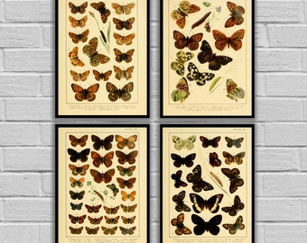 Vintage Butterflies - Set of 4 - Print or Canvas - Vintage Butterfly Prints - Insect Wall Art - Butterfly and Moth Lithographs   - 235 - 238