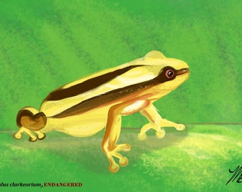 ENDANGERED SPECIES COLLECTION: Clark's Banana Frog