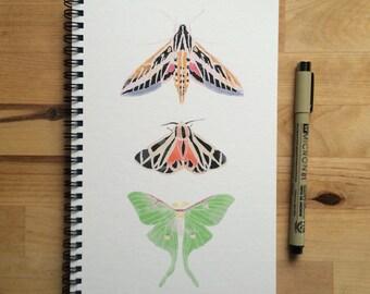 Notebook - Moths