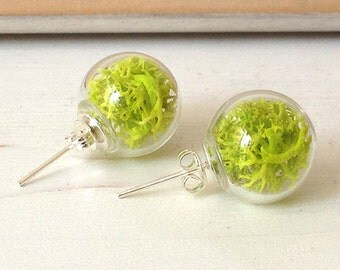 DISCOUNTED earrings studs with glass sphere and lichens//20% SALT//DISCOUNT