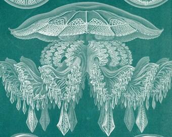 Medusa Jellyfish, Jellyfish Medusa, Medusa Illustration, Jellyfish Illustration, Haeckel Jellyfish, Jellyfish Haeckel, Ernst Haeckel