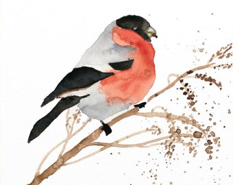 bullfinch original watercolor painting bird painting bullfinch painting 29.7x21cm (11.69x8.4inch)