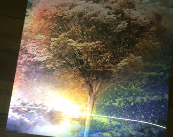 3D Tree (our only 4 transitional picture poster available)