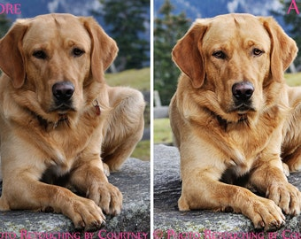 PET PHOTO Retouching