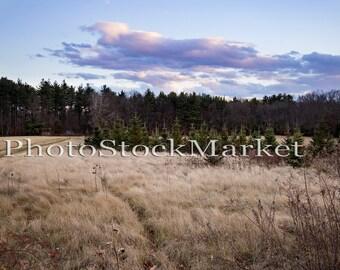 Fall Field - Digital Background - 62 - Dry Grass - Pine trees - New England - Digital backdrop - Farm Field - Winter Pasture