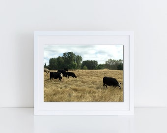 Cows, Photo of Cows, Field of Cows, Photography print of Cows, Colored Photo