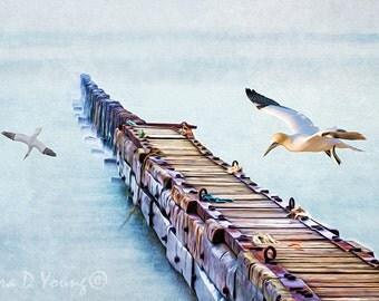 Ocean Art Print, Old Wooden Pier, Long Dock, Mist Over Water, Northern Gannet Birds, Birds Flying, Nature Art Print, Fine Art Photography