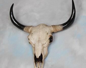 Bison skull head