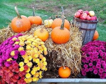 SALE Matted Print-30% Off-Farm Market Bounty-Farm Photography, Farmhouse Decor, Country Kitchen, Pumpkins, Fall Flowers, Farm Market, Autumn