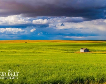 Alberta Canada Landscape Photography Canola Field Prairie Landacape Abandoned House - Fine Art Print Wall Decor