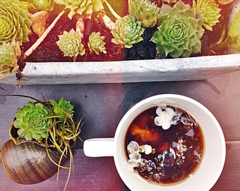 Coffee and Cacti