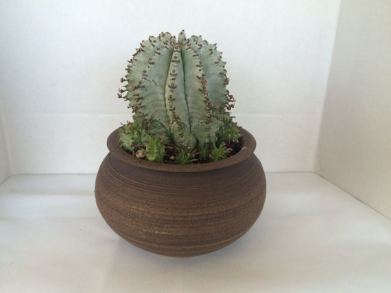 Cactus Plant Hand Thrown Pottery Planter DIY Complete
