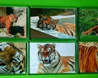 Tigers Fridge Magnet, Set of 6/ Refrigerator Magnets / Kitchen Decor