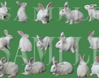 15 White Rabbit PNG overlay files
