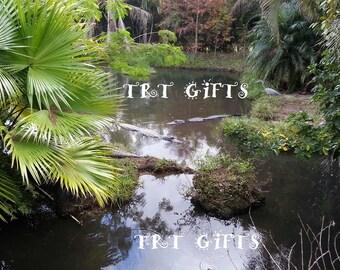 Florida Gators *Digital Download*
