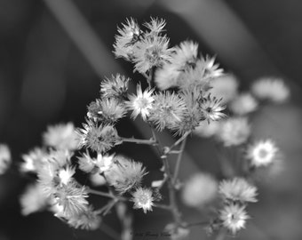 Fall Flowers Black and White Dried Flowers Wall Hanging Home Decor Office Decor Floral Print