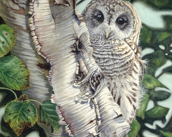 Barred Owl II - Giclee PRINT of Watercolor painting