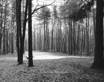 Serene Black and White Forest Photo Print