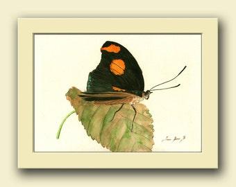 Grecian schoenmaker vlinder - vlinder dier-insect decor - dierenleven kunst aan de muur - originele aquarel schilderij-Juan Bosco