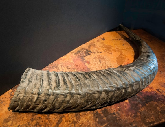 Genuine Large Water Buffalo Natural Horn