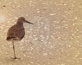 Sand Piper on One Leg - Digital Photo Download