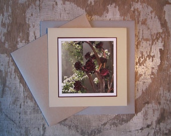 Succulent Rosettes, handmade, greeting card, blank, square, photo