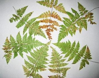 Handgemachte herbarium etsy - Einweihungsparty auf englisch ...