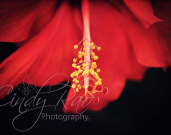 Flower, Photography, Print, Affordable, Under 10 Dollars, 8x10, Hibiscus, Red, Macro, Soft, Floral