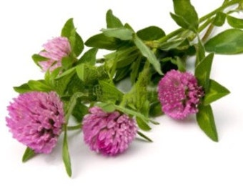 Red Clover (Dried)