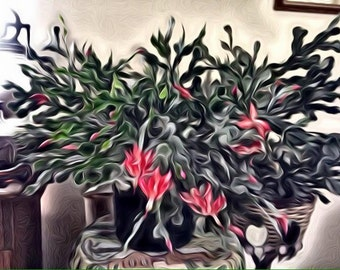 PHOTO #8: Digital photo-file; Large Christmas Cactus with red blooms