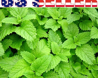 100+ ORGANIC Lemon Balm Melissa Heirloom NON-GMO Organically Grown Fragrant