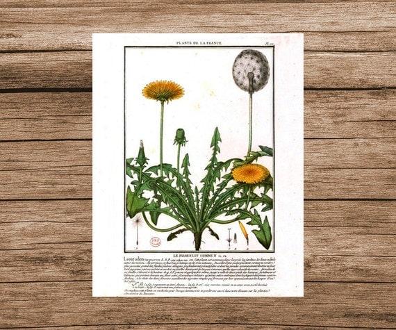Daisy Kitchen Decor: Daisy Art Print Botanical Poster Vintage Print Kitchen