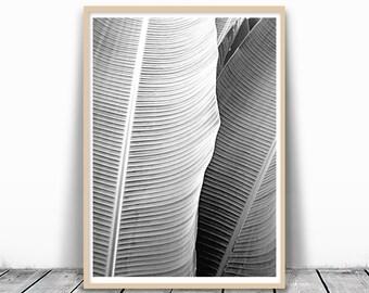 Banana Leaf, Art Download, Banana Leaf Print, Palm Leaf Art, Black and White Leaf Print, Tropical Leaves, Tropical Art Print, Leaf Printable