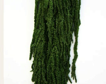 Preserved Hanging Amaranthus. Basil Green