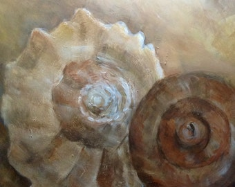Key West Conch Shells