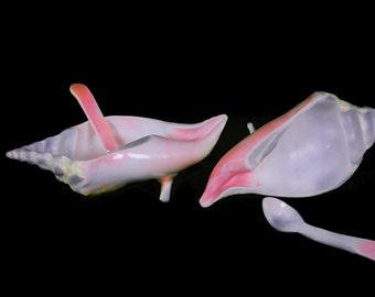 Conch Shell Bowl w/ spoon