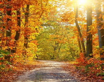 Orange Forest Backdrop - Fall,Autumn,sunshine,fantasy romantic scene - Printed Fabric Photography Background G0295
